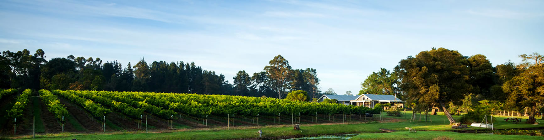 Plett Winelands wine farm