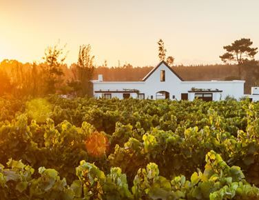 Wine estates with guest accommodation in Plettenberg Bay